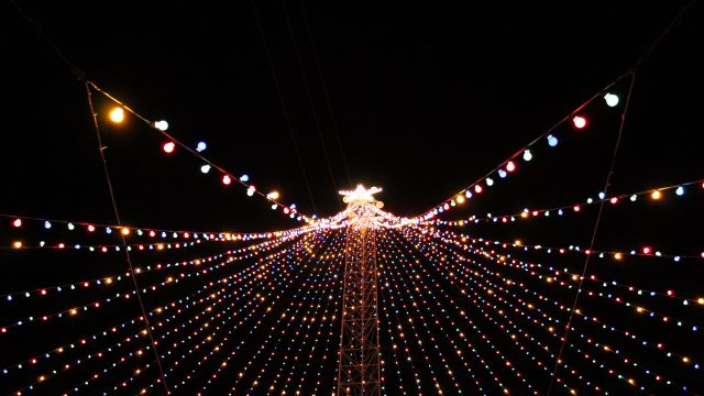 Zilker Tree - Photo by Jordan Roberts